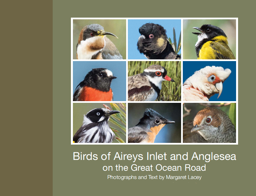 Birds of Aireys Inlet and Anglesea on the Great Ocean Road, Margaret Lacey,Book of bird photographs. With good locations for bird photography on the Surf Coast. Cover Photographs: Eastern Spinebill, Yellow-tailed Black-Cockatoo, Golden Whistler, Scarlet Robin, Black-fronted Dotterel, Long-billed Corella, New Holland Honeyeater, Satin Flycatcher, Rufous Bristlebird.